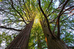 heavenslight by MT-Photografien