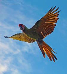 flying beauty by MT-Photografien