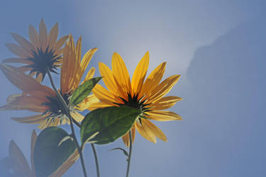 autumnal beauties by MT-Photografien