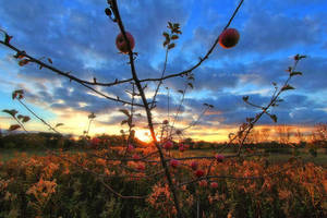 a beautiful autumn comes to an end by MT-Photografien