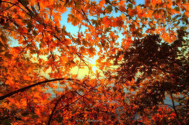 beautiful autumn colors by MT-Photografien