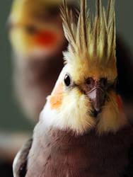 Bird 3 by jiangchen