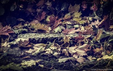 Autumn by Nela23235