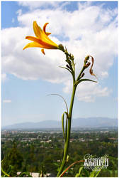 Hollywood Flower by Michelliechelle