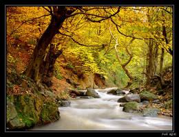 Autumn Beauty by fatihkilic