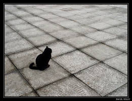 Cat Geometry by fatihkilic