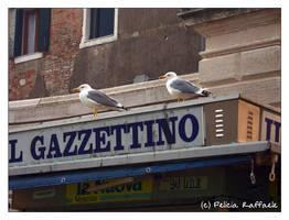 Strilloni d'eccezione by Cicia