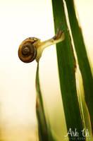 Snail equilibrium by Arkus83