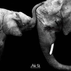Elephant Love by Arkus83