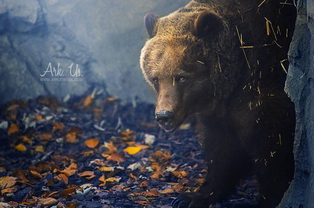 Bear by Arkus83