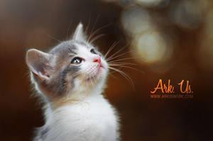 Little cutie by Arkus83