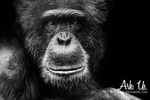 Chimpanze by Arkus83