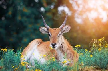 Antilope by Arkus83