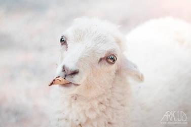 Lamb by Arkus83
