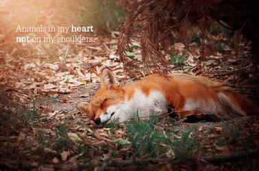 Le renard - des mots en image by Arkus83