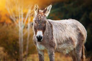 Donkey by Arkus83