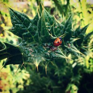 Nature Walk I} A Walk Among Thorns by OtakuNeko2499