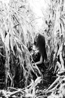 Mon bebe - Audrey by Kalistor