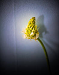 flower stem by zarzibar