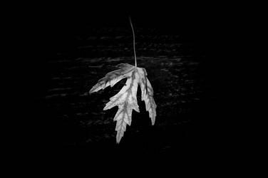 leaf still life by zarzibar