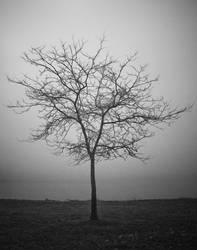 foggy tree by zarzibar