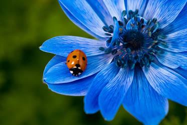 ladybug by zarzibar