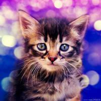 Handsome Little Fellow by ZoranPhoto