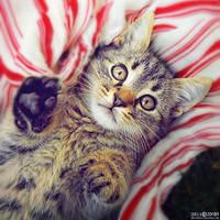 S T O P by ZoranPhoto