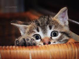 My hiding place by ZoranPhoto