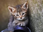 Driving kitten by ZoranPhoto