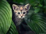 Hello Kitty by ZoranPhoto