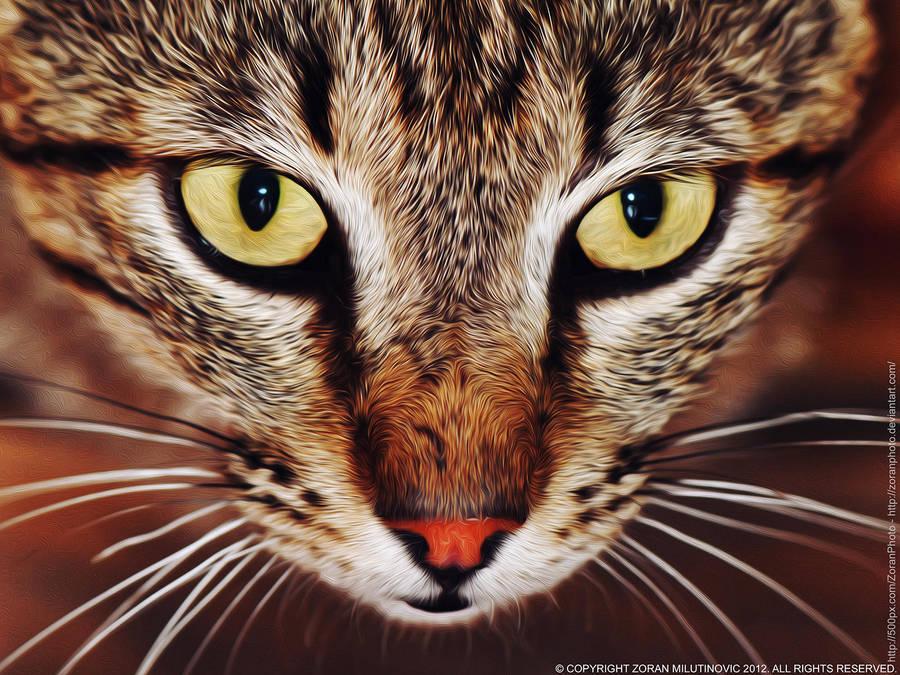 The Eyes by ZoranPhoto