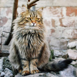 Fluffy The King by ZoranPhoto