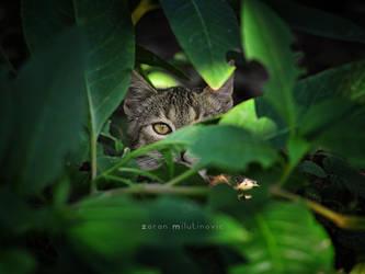 Spying cat by ZoranPhoto