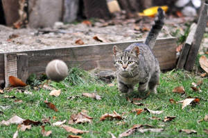 Catch that ball! by ZoranPhoto