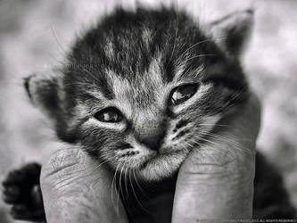 Sad eyes by ZoranPhoto