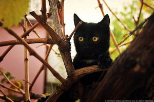 Want to be a Black Panther?! by ZoranPhoto