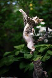 Supercat by ZoranPhoto
