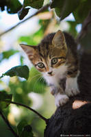 Hunter by ZoranPhoto
