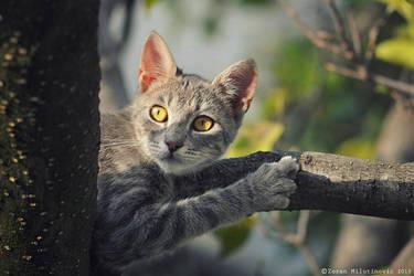 Hunter on a mission by ZoranPhoto