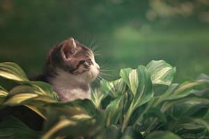 Sunbathing by ZoranPhoto