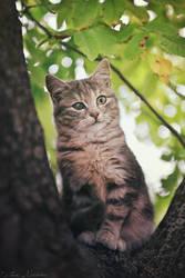 Little observer by ZoranPhoto