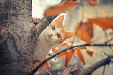 Camouflage by ZoranPhoto