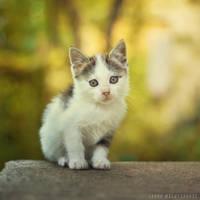Little furball by ZoranPhoto