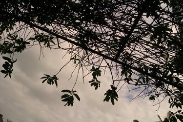 leaves by the clouds by bonangBarung