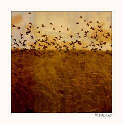 Birds by myrnajacobs