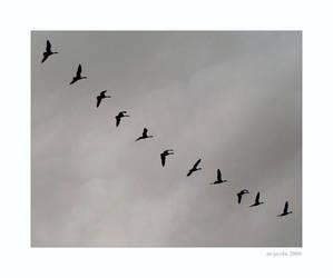 Flight Pattern by myrnajacobs