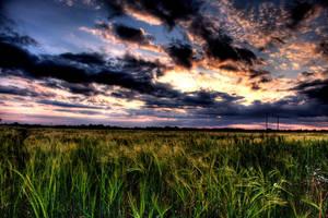 Corn Field 2 by Wallam91