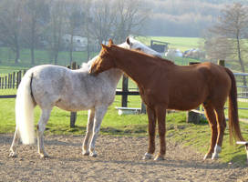 old chestnut warmblood  and andalusian friend by Nexu4