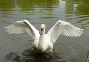 white swan - stock wings by Nexu4